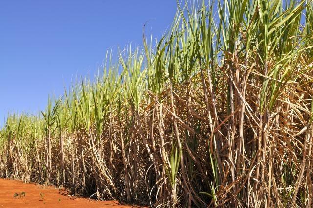 Safra de cana-de-açúcar 17/18 é estimada em 647,6 milhões ton
