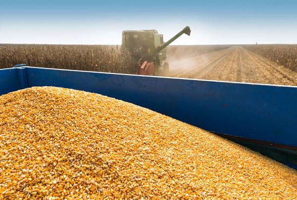Conab enviará 59,45 mil t de milho para o Norte e Nordeste