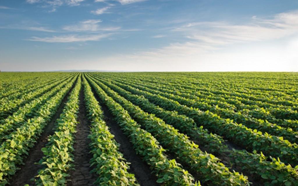 Programa de Seguro Rural 2017 terá R$90 milhões