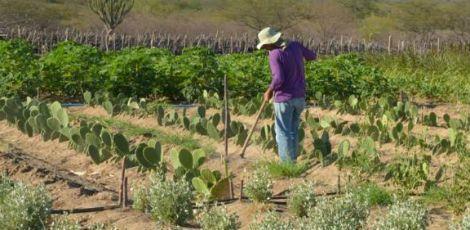 FPA estuda soluções para dívidas dos produtores com o Funrural