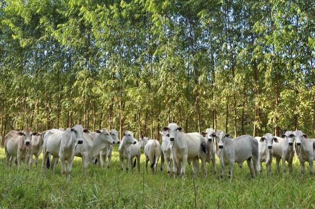 Evento apresenta os benefícios da integração lavoura pecuária