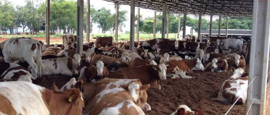 Uma revolução para a pecuária de corte e de leite