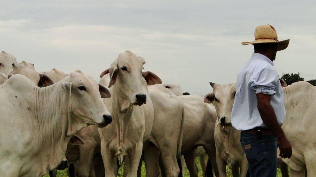 Encontro discutirá estratégias de resultados para a pecuária lucrativa