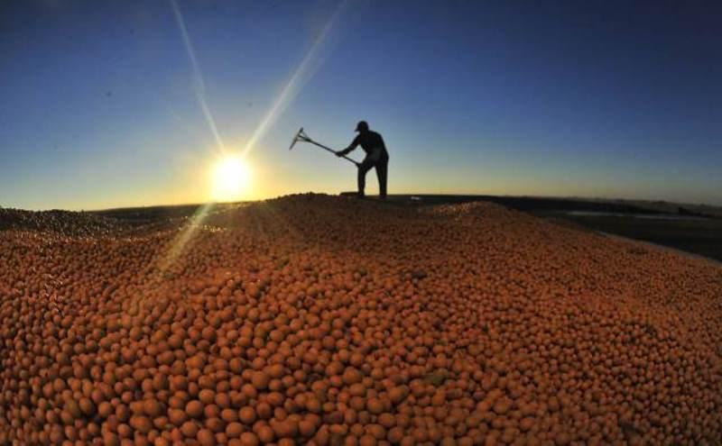 Agronegócio gera 19 milhões de empregos no Brasil
