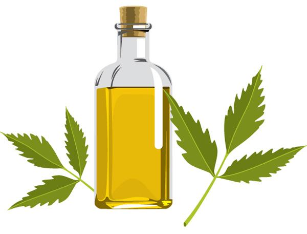 Tudo sobre o óleo de neem